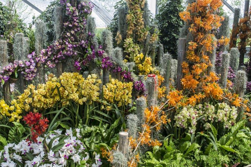 Exposition d'orchidée images libres de droits