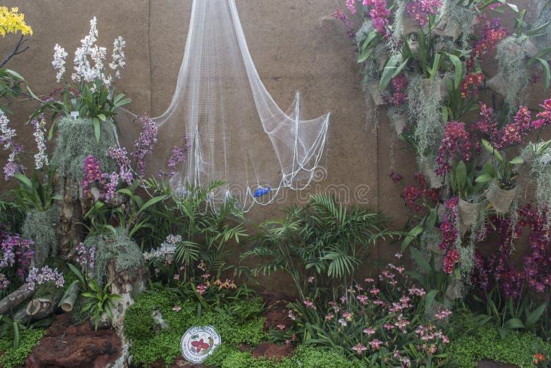 Exposition d'orchidée image libre de droits