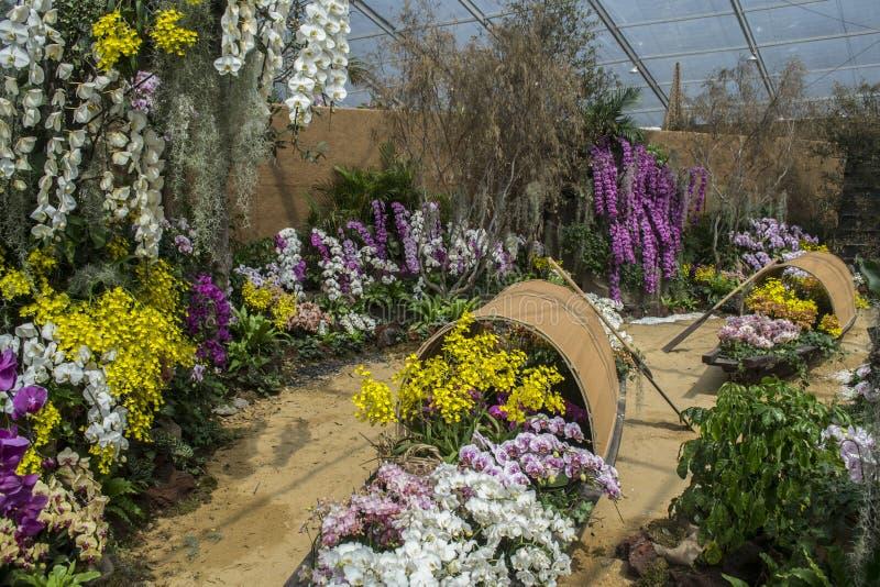Exposition d'orchidée photo libre de droits