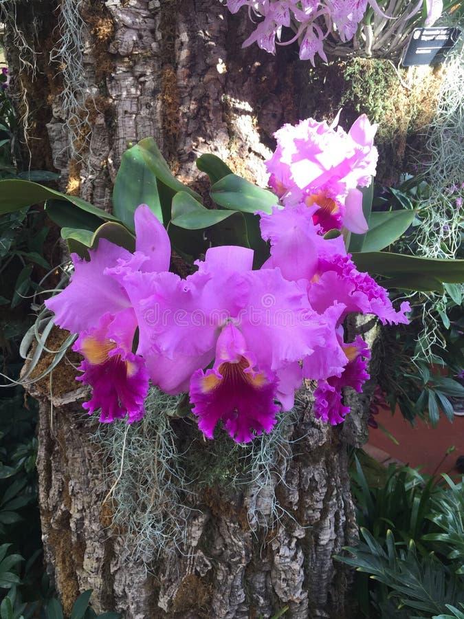 Exposition d'orchidée Jardin botanique Contraste vert et rouge photo libre de droits