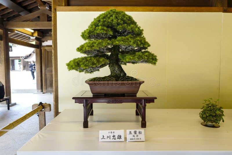 Exposition d'usines de bonsa?s chez Meiji Shrine Une fève est un pot formé par plateau et le sai traduit comme 'de planting〠photographie stock libre de droits