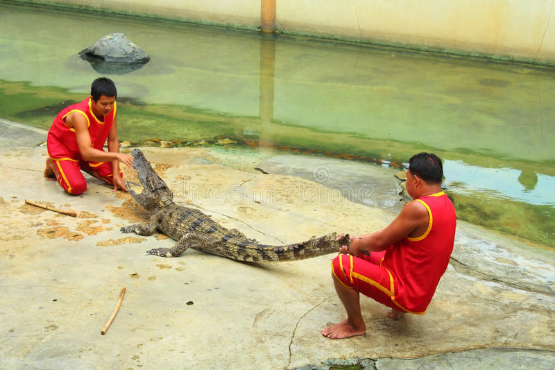 Exposition de crocodile images libres de droits