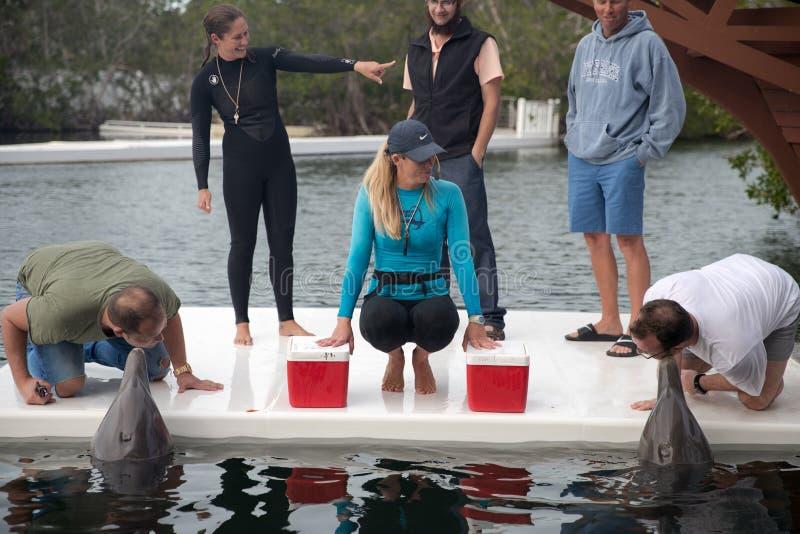 Exposition de dauphin dans le théâtre de la mer chez Islamorada images libres de droits