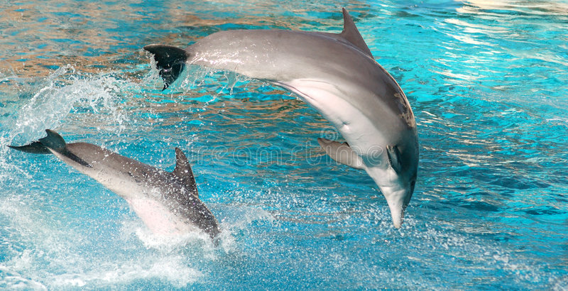 Exposition de dauphins image libre de droits
