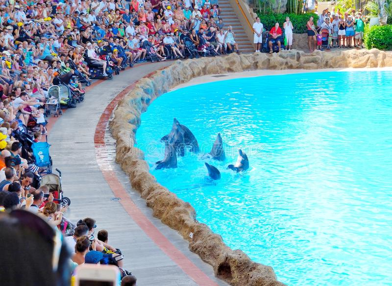 Exposition de dauphins photographie stock