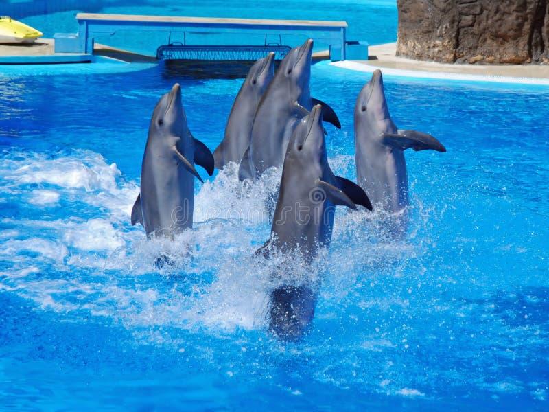 Exposition de dauphins avec des dauphins de danse images stock
