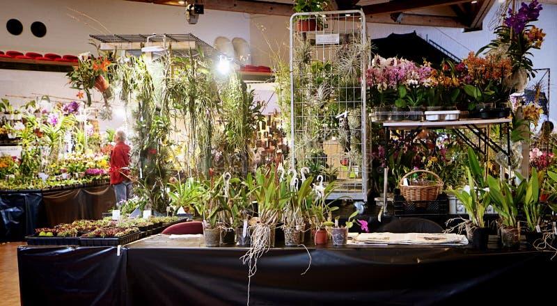 Exposition de fascination d'orchidées dans Garching, Allemagne photos libres de droits