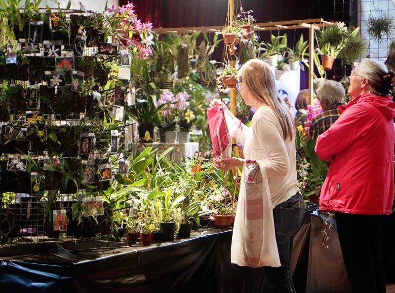 Exposition de fascination d'orchidées des orchidées colorées dans Garching, Allemagne photographie stock libre de droits