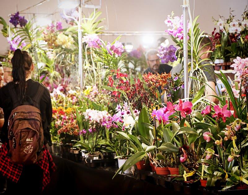 Exposition de fascination d'orchidées des orchidées colorées dans Garching, Allemagne photos libres de droits
