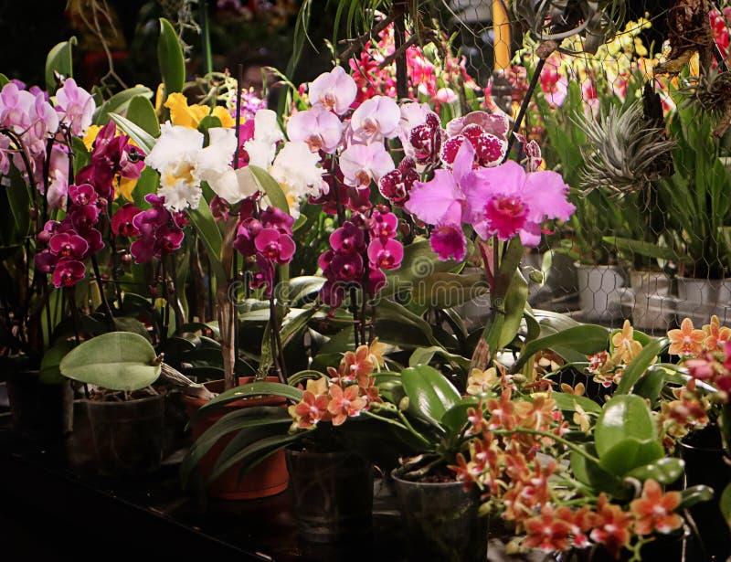 Exposition de fascination d'orchidées des fleurs colorées dans Garching, Allemagne images stock