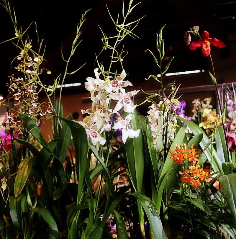Exposition de fascination d'orchidées des fleurs colorées dans Garching, Allemagne photos stock