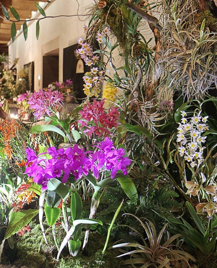 Exposition de fascination d'orchidées des fleurs colorées dans leur environnement dans Garching, Allemagne image stock