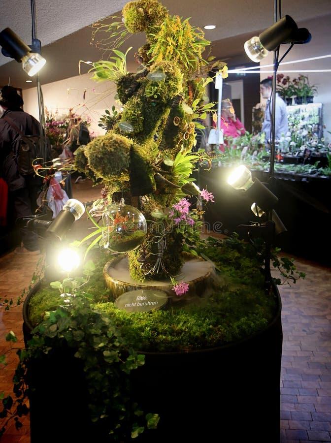 Exposition de fascination d'orchidées des fleurs tropicales colorées dans Garching, Allemagne photo stock