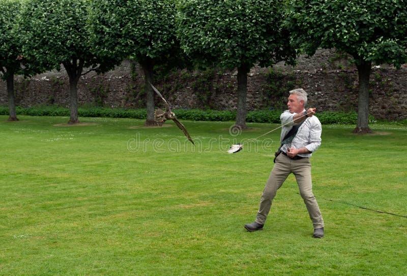 Exposition de fauconnerie au château de Dunrobin, Ecosse photos libres de droits