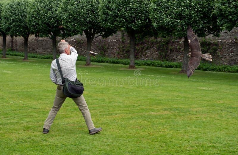 Exposition de fauconnerie au château de Dunrobin, Ecosse image libre de droits