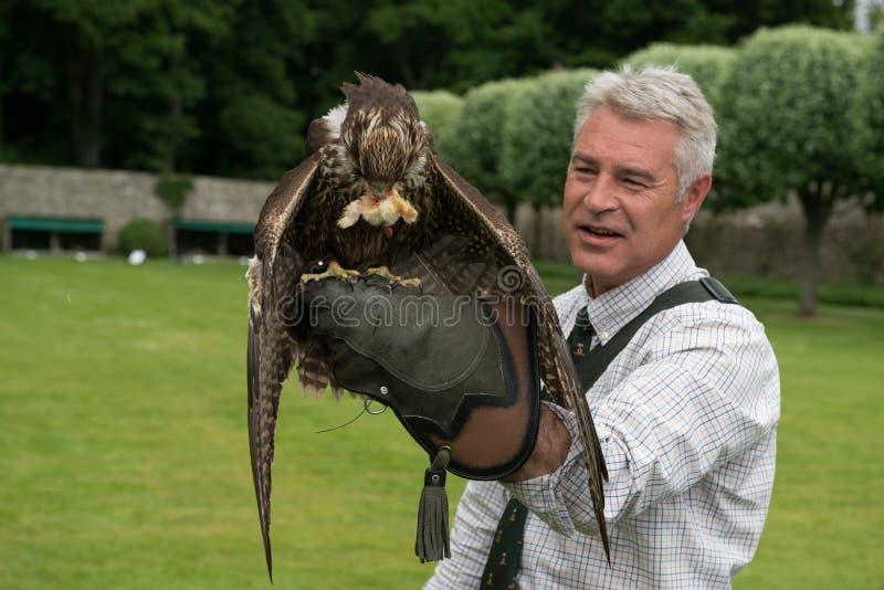 Exposition de fauconnerie au château de Dunrobin, Ecosse photo libre de droits