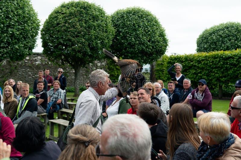 Exposition de fauconnerie au château de Dunrobin, Ecosse image stock