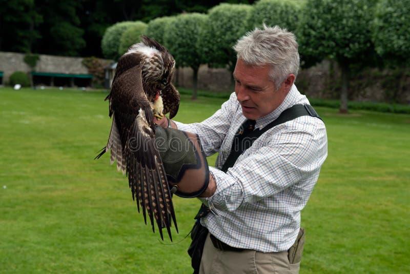 Exposition de fauconnerie au château de Dunrobin, Ecosse photos stock