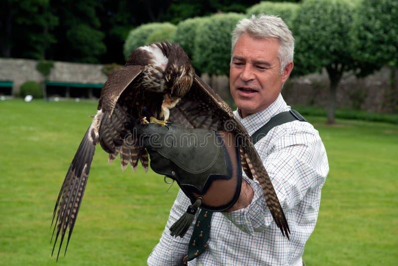 Exposition de fauconnerie au château de Dunrobin, Ecosse images stock