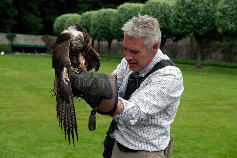 Exposition de fauconnerie au château de Dunrobin, Ecosse photographie stock