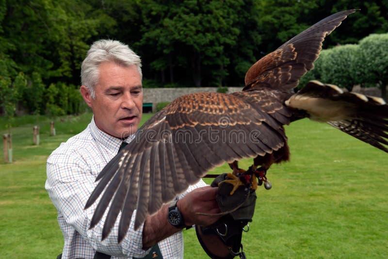 Exposition de fauconnerie au château de Dunrobin, Ecosse photographie stock libre de droits