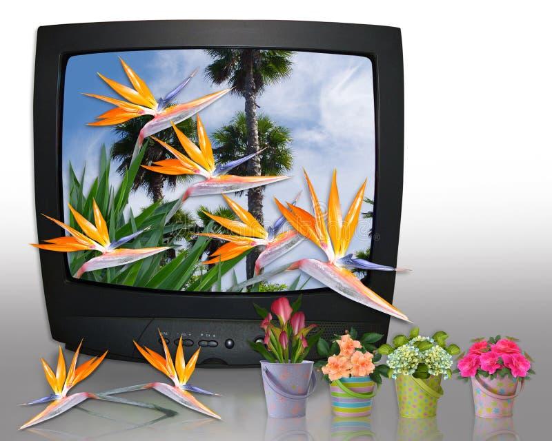 Exposition de jardinage de TV illustration stock