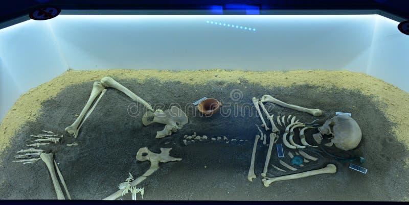 Exposition de l'enterrement d'un humain préhistorique dans un récipient de musée images libres de droits
