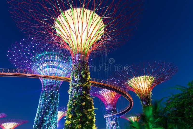 Exposition de lumière de rhapsodie de jardin au verger superbe d'arbre, Singapour photographie stock libre de droits