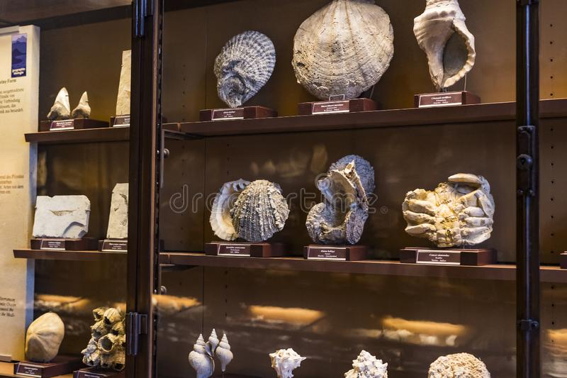 Exposition of fossil protozoa and mollusks in the Museum of Natural History, Vienna. 3 SEPTEMBER 2018, VIENNA, AUSTRIA: Exposition of fossil protozoa and stock images