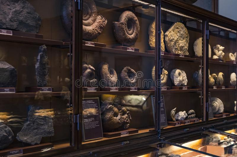 Exposition of fossil protozoa and mollusks in the Museum of Natural History, Vienna. 3 SEPTEMBER 2018, VIENNA, AUSTRIA: Exposition of fossil protozoa and royalty free stock images