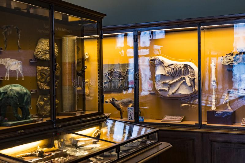 Exposition of fossil protozoa and mollusks in the Museum of Natural History, Vienna. 3 SEPTEMBER 2018, VIENNA, AUSTRIA: Exposition of fossil protozoa and royalty free stock photos