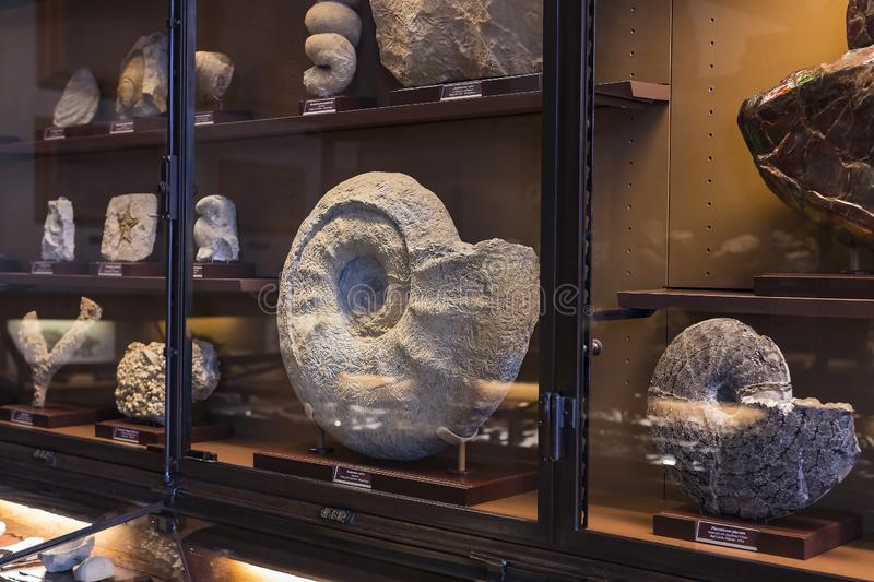 Exposition of fossil protozoa and mollusks in the Museum of Natural History, Vienna. 3 SEPTEMBER 2018, VIENNA, AUSTRIA: Exposition of fossil protozoa and stock photos