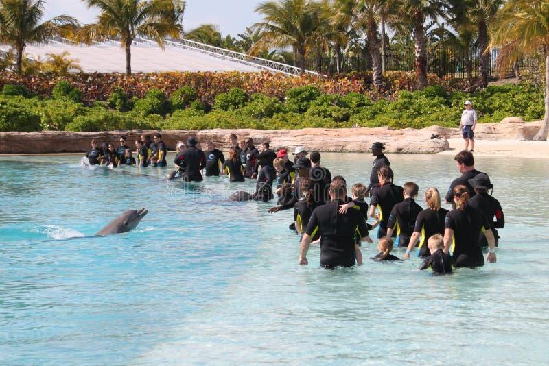 Exposition l'Atlantide Bahamas de dauphin images libres de droits