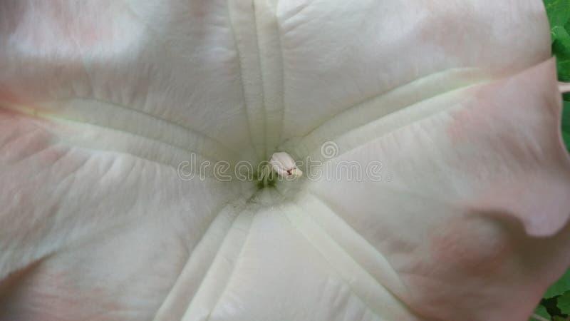 expresión interna de una flor fotos de archivo