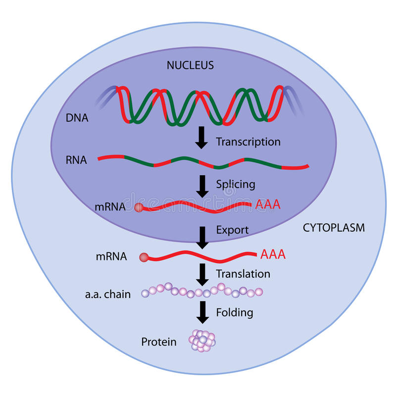 Expressão de gene ilustração do vetor