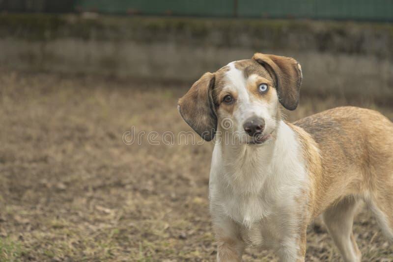 Expressão engraçada da cara do cão de cachorrinho fotografia de stock royalty free