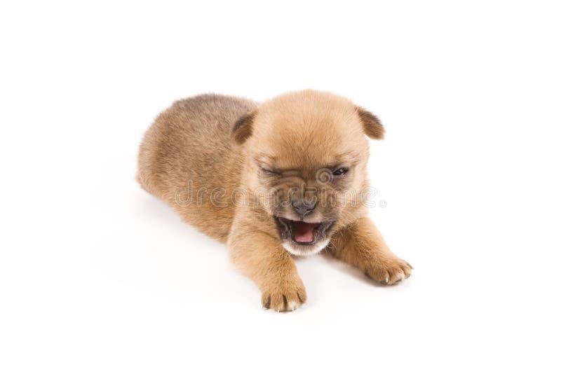 Expressief puppy stock foto's