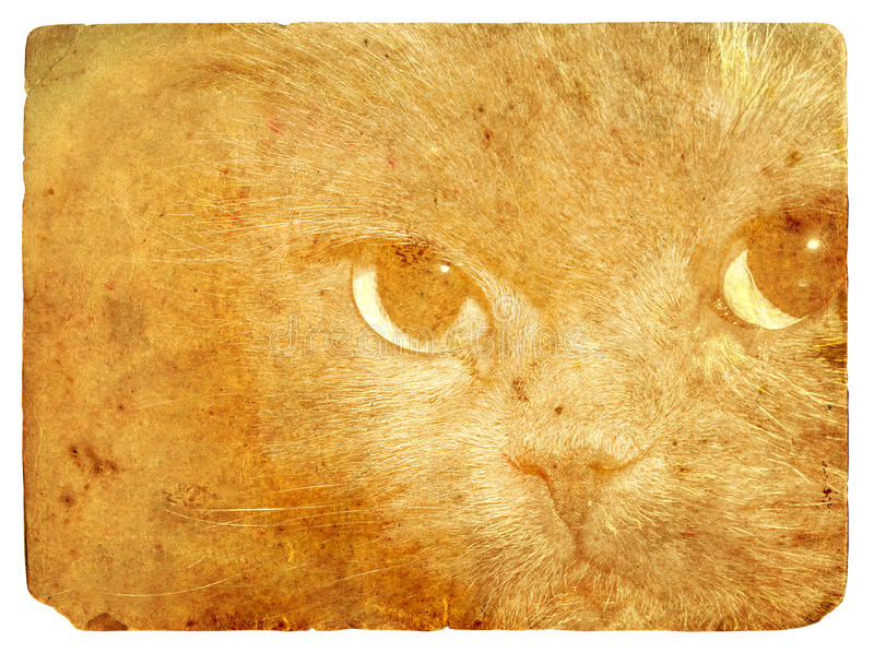 Expressive cat eyes. Old postcard. royalty free illustration