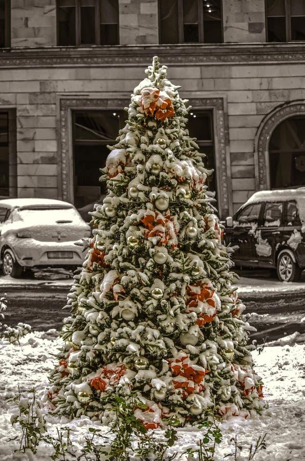 Extérieur croissant de sapin naturel, couvert de première neige, décorée des décorations de Noël, boules blanches, poinsettia rou image stock