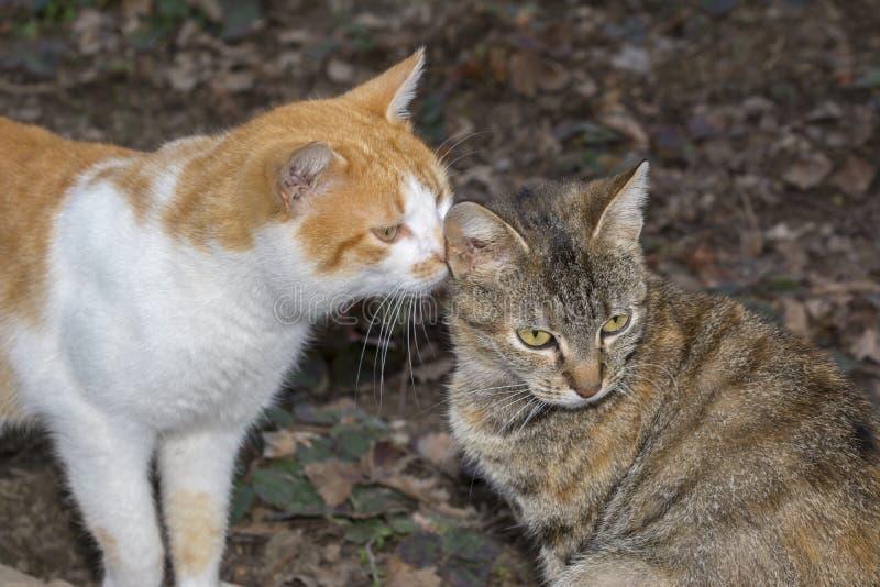 Extérieur de détente de chat Deux petits chats Le chat aime le minou photos stock