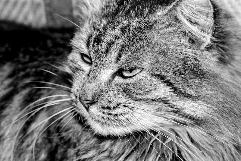 Extérieur de détente de chat Le chat aime le minou Chat de plan rapproché images libres de droits