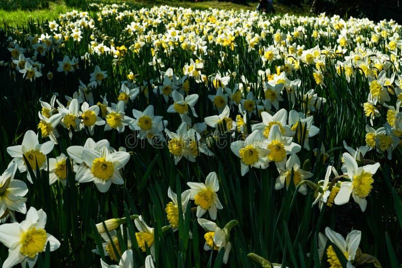 Extensão de surpresa dos tipos de flor em um prado do castelo de Masino foto de stock royalty free