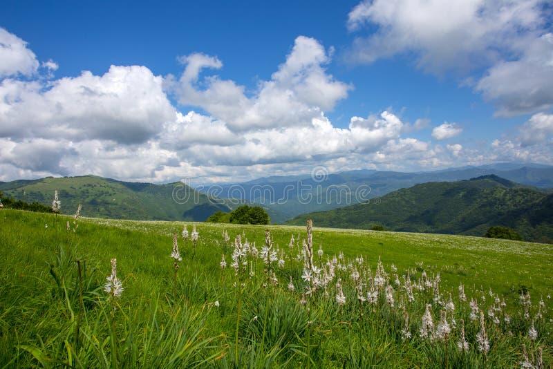 Extensões do prado com asphodels e flores do narciso sob um céu azul com nuvens fotografia de stock royalty free