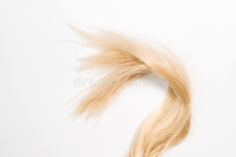 Extensões naturais louras do cabelo isoladas no fundo branco Remendo do grampeamento, espaço da cópia fotografia de stock royalty free