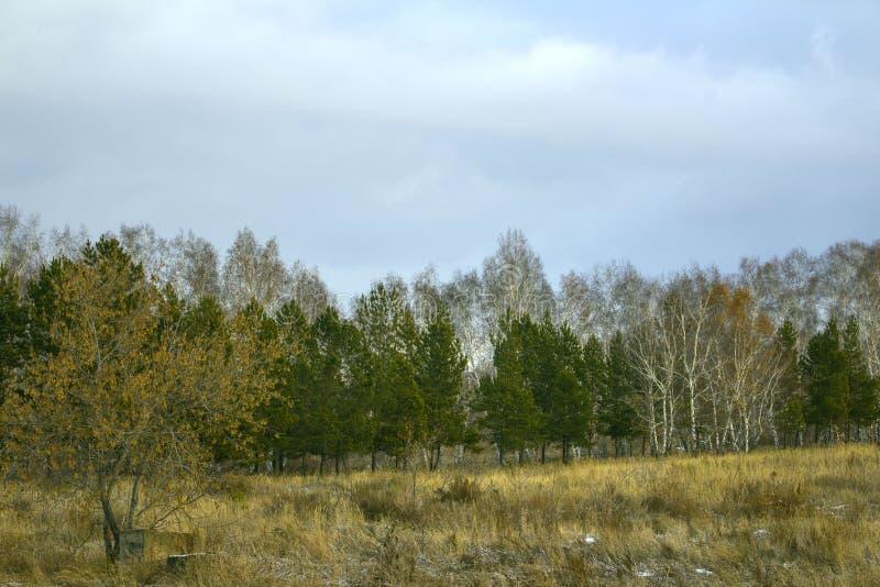 Extensiones siberianas en tiempo nublado en último otoño fotos de archivo