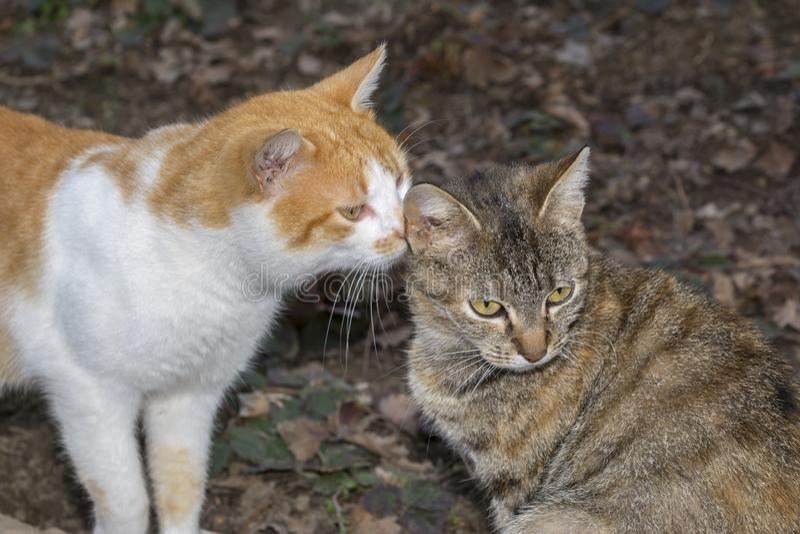 Exterior de relajación del gato Dos pequeños gatos El gato ama el gatito fotos de archivo