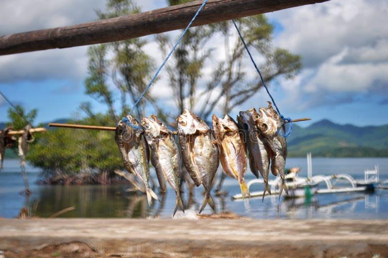 Exterior de sequía de los pequeños pescados fotos de archivo libres de regalías