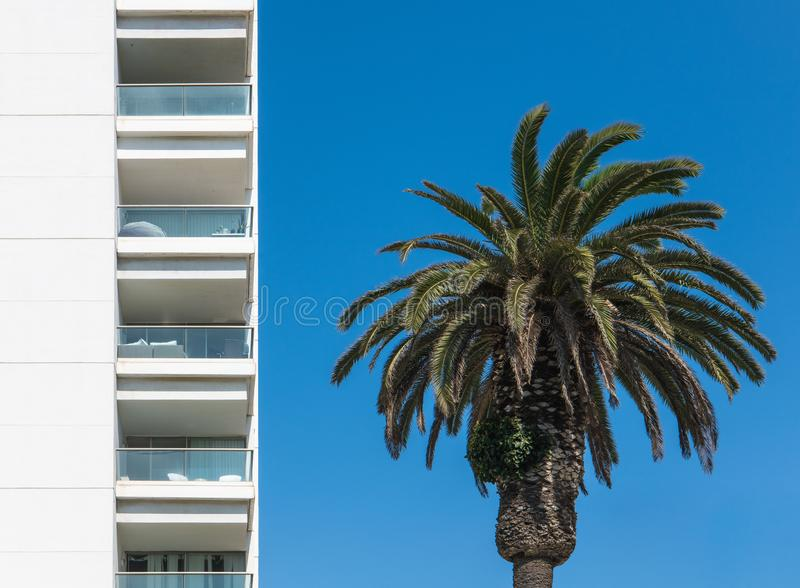 Exterior of a high modern white building with multiple floors of balconies next to a palm tree under a perfect blue sky stock photography