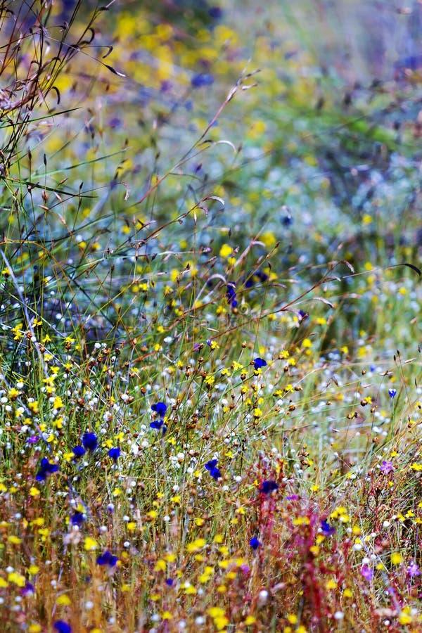 Exterior no Utricularia do campo fotografia de stock royalty free