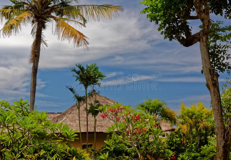 Thatched hut in palm trees, Bali, Indonesia stock image